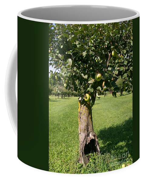Apple Coffee Mug featuring the photograph Hollow Apple Tree by Laurie Eve Loftin