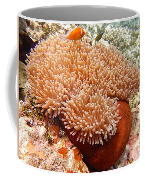 Clown Coffee Mug featuring the photograph Home Of The Clown Fish 2 by Michael Scott