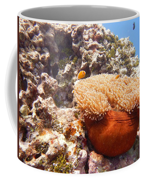 Clown Coffee Mug featuring the photograph Home Of The Clown Fish 4 by Michael Scott