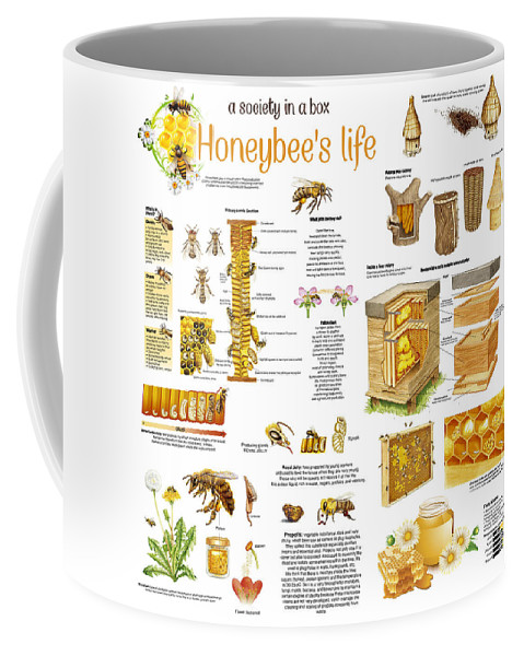 Honey Coffee Mug featuring the drawing Honey Bees Infographic by Gina Dsgn