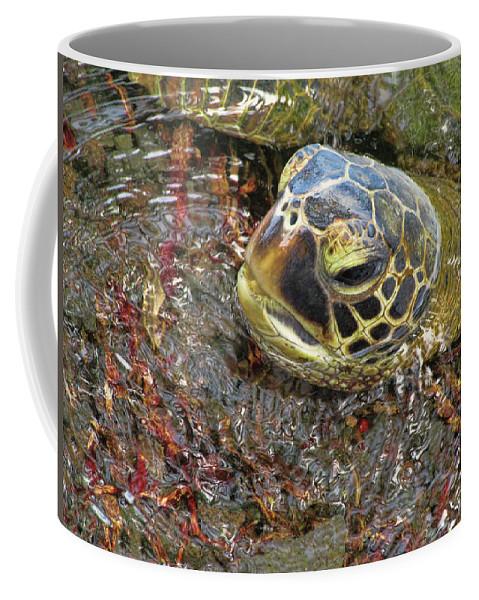 Pamela Walton Coffee Mug featuring the photograph Honu In The Water by Pamela Walton