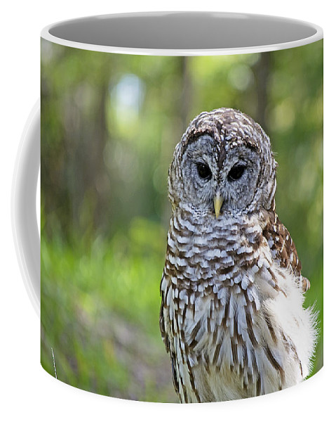 Owl Coffee Mug featuring the photograph Hoo Are You by Kenneth Albin
