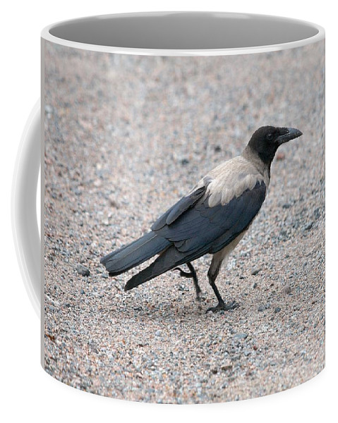 Lehtokukka Coffee Mug featuring the photograph Hooded Crow by Jouko Lehto