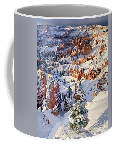 North America Coffee Mug featuring the photograph Hoodoos And Fir Tree In Winter Bryce Canyon Np Utah by Dave Welling