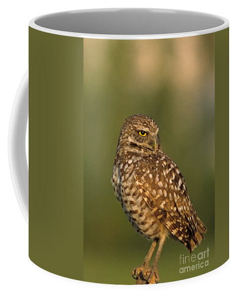 Bird Coffee Mug featuring the photograph Hoot A Burrowing Owl Portrait by John Harmon