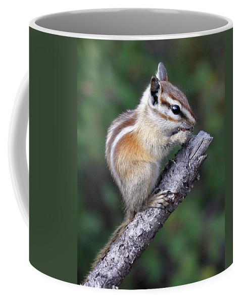 Chipmunk Coffee Mug featuring the photograph Hopi Chipmunk by Doris Potter