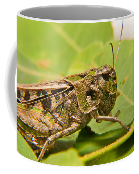 Grasshopper Coffee Mug featuring the photograph Hopper Face To Face by Douglas Barnett