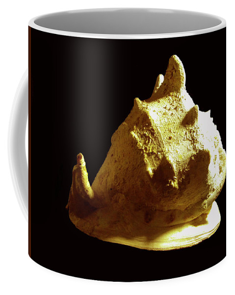 Frank Wilson Coffee Mug featuring the photograph Horned Helmet Seashell Cassis Cornuta by Frank Wilson