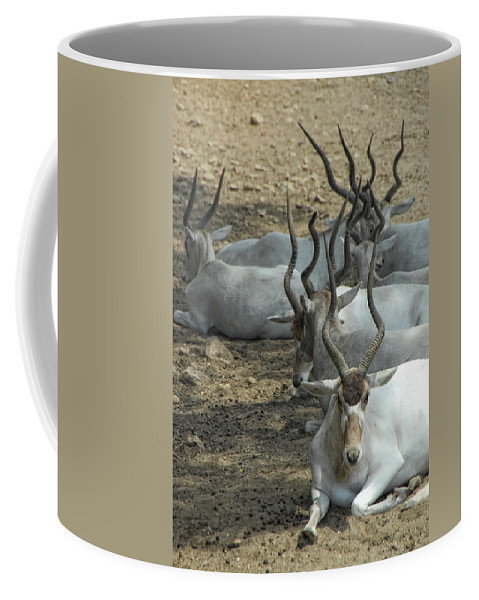 Addax Coffee Mug featuring the photograph Horney by Donna Blackhall
