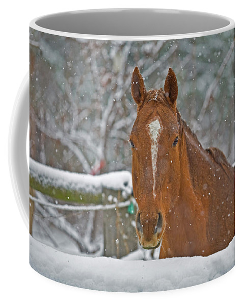 Horse Coffee Mug featuring the photograph Horse And Snowflakes by Darrel Giesbrecht
