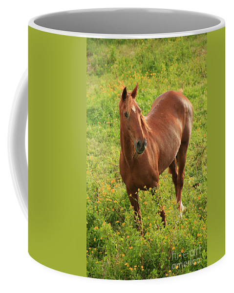 Animals Coffee Mug featuring the photograph Horse In A Field With Flowers by Gaspar Avila
