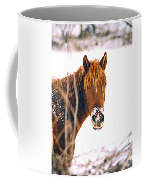 Horse Coffee Mug featuring the photograph Horse In Winter by Steve Karol