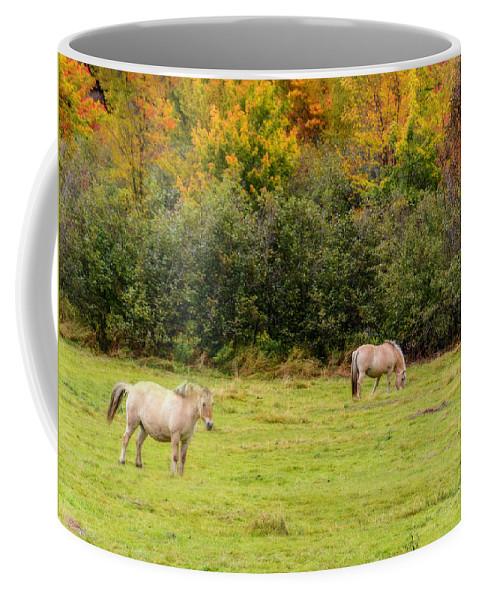 Lake Ainslie Coffee Mug featuring the photograph Horses Enjoying A Beautiful Autumn Day by Ken Morris