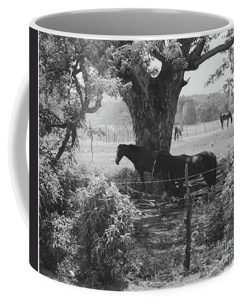Horses Coffee Mug featuring the photograph Horses In The Pasture by Michelle Powell