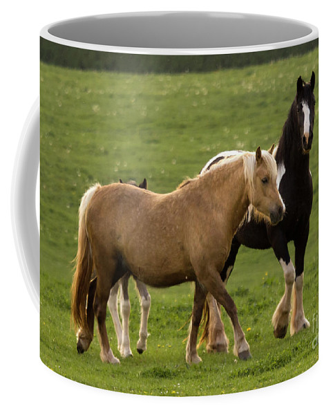Horse Coffee Mug featuring the photograph Horses Photography by Angel Ciesniarska