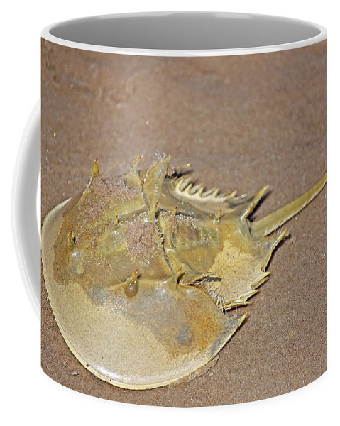 Crab Coffee Mug featuring the photograph Horseshoe Crab by Kenneth Albin