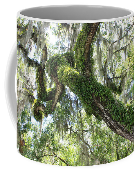Tree Coffee Mug featuring the photograph Host Tree by Carol Groenen