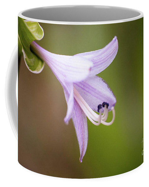Hosta Coffee Mug featuring the photograph Hosta by Kevin Gladwell