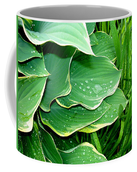 Hostas Coffee Mug featuring the photograph Hosta Leaves And Waterdrops by Nancy Mueller