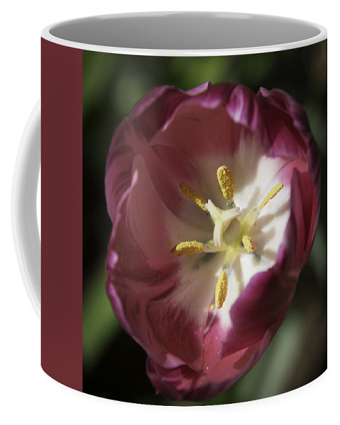 Flowers Coffee Mug featuring the photograph Hot Pink Tulip Center Squared by Teresa Mucha