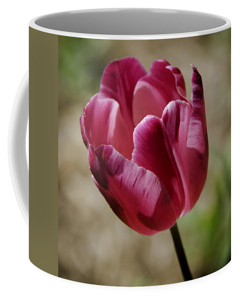 Flowers Coffee Mug featuring the photograph Hot Pink Tulip Squared by Teresa Mucha