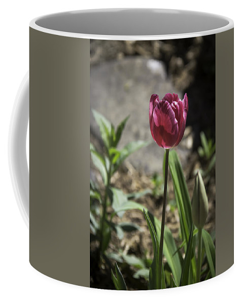 Flowers Coffee Mug featuring the photograph Hot Pink Tulip by Teresa Mucha