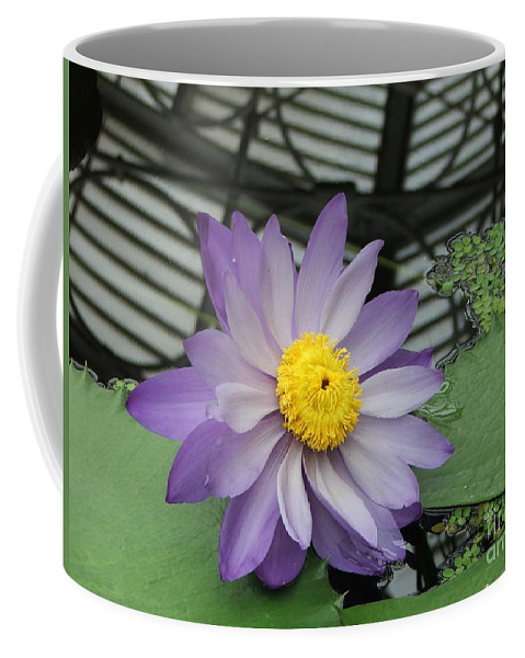 Purple Coffee Mug featuring the photograph Hothouse Waterlily by Heather Lennox