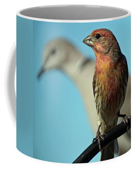 Finch Coffee Mug featuring the photograph House Finch and Dove by David G Paul