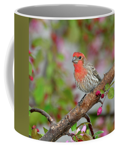 Finch Coffee Mug featuring the photograph House Finch by Betty LaRue