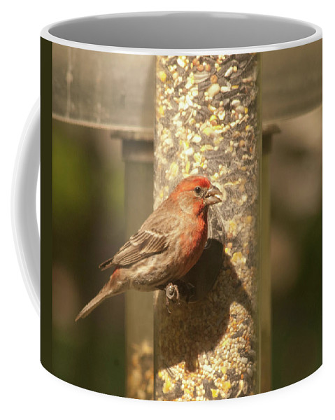 House Finch Coffee Mug featuring the photograph House Finch by Diane Schuler