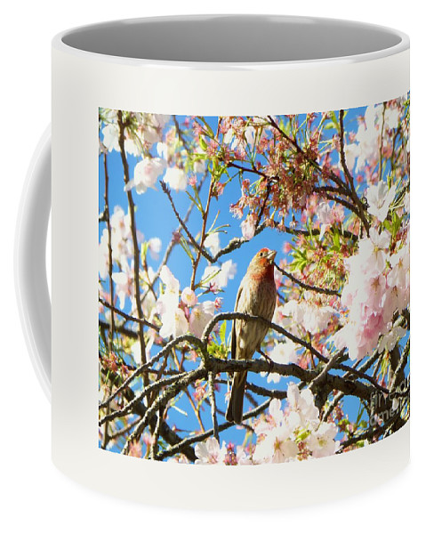 Cherry Tree Coffee Mug featuring the photograph House Finch In The Cherry Blossoms by As the Dinosaur Flies Photography
