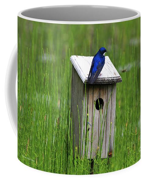 Swallow Coffee Mug featuring the photograph House Sitting by Deborah Benoit