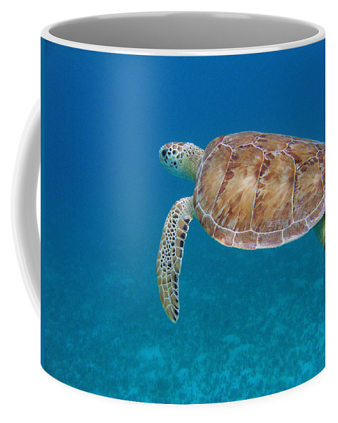 Green Sea Turtle Coffee Mug featuring the photograph How Green It Is by Kimberly Mohlenhoff