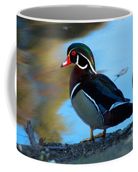 Clay Coffee Mug featuring the photograph How Much Wood Could A Wood Duck Chuck by Clayton Bruster