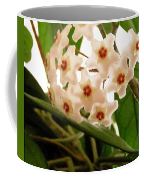 Hoya Flowers Coffee Mug featuring the photograph Hoya by Stephanie Moore