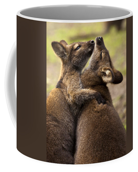 Wallaby Coffee Mug featuring the photograph Hugs by Mike Dawson