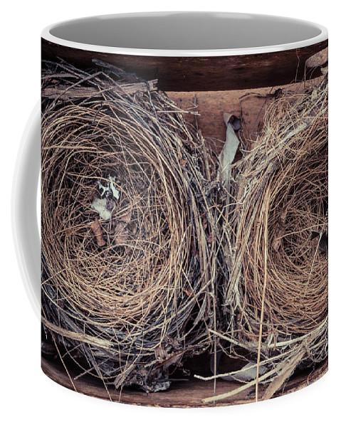 Hummingbird Coffee Mug featuring the photograph Humming Bird Nests by Edward Fielding