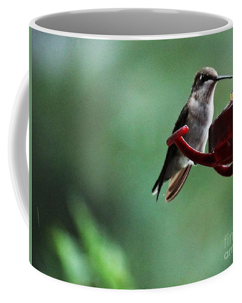 Hummingbird Coffee Mug featuring the photograph Hummingbird At Rest by Gina Sullivan