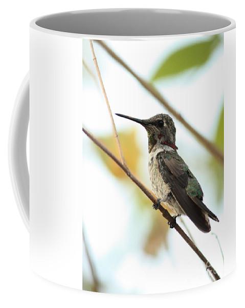Hummingbird Coffee Mug featuring the photograph Hummingbird Between Branches by Carol Groenen