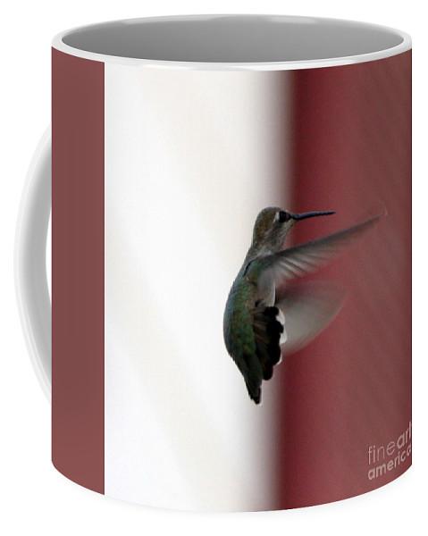 Hummingbird Coffee Mug featuring the photograph Hummingbird Changing Course by Carol Groenen