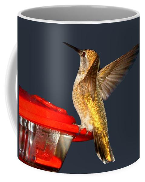 Anna's Hummingbird Coffee Mug featuring the photograph Hummingbird In My Window by Kathy Moll