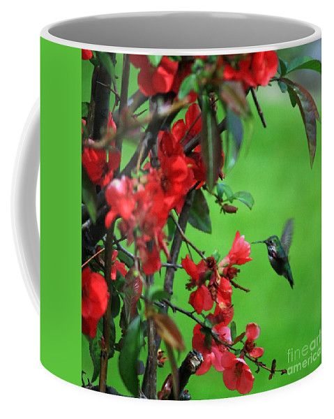 Flowering Quince Coffee Mug featuring the photograph Hummingbird In The Flowering Quince - Digital Painting by Carol Groenen
