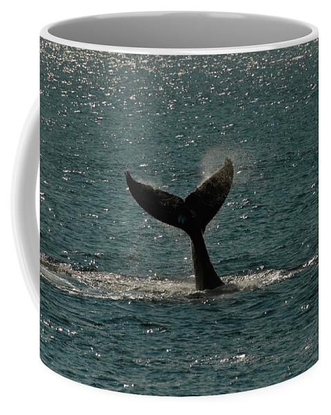 Humpback Whale Coffee Mug featuring the photograph Humpback Whale Lifts Its Fluke. I by Ralph Lee Hopkins