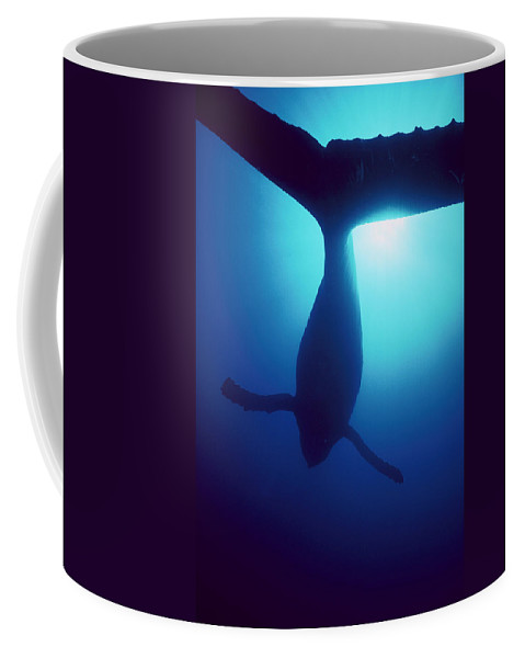 Mp Coffee Mug featuring the photograph Humpback Whale Megaptera Novaeangliae by Flip Nicklin