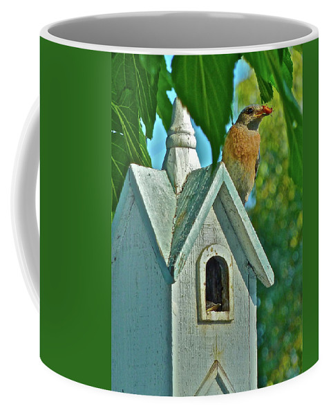 Birds Coffee Mug featuring the photograph Hungry Baby by Diana Hatcher