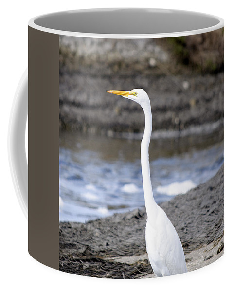Egret Coffee Mug featuring the photograph Hungry Great Egret by Kenneth Albin