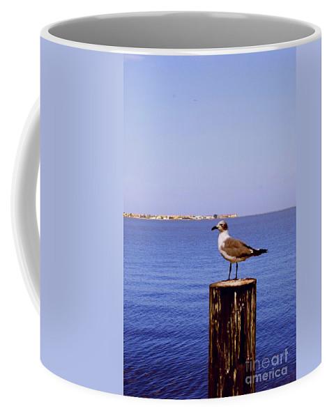 Sea Gull Coffee Mug featuring the photograph Hungry Sea Gull by Gary Wonning