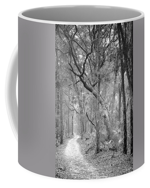 Canvas Coffee Mug featuring the photograph Hunting Island Path by Phill Doherty
