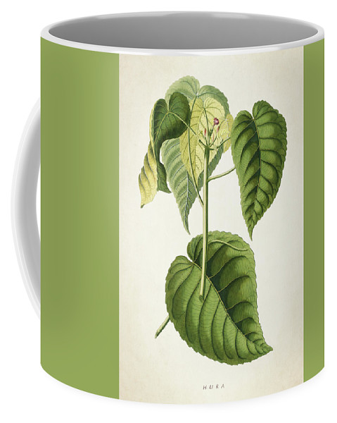Botanical Coffee Mug featuring the digital art Hura Botanical Print by Aged Pixel