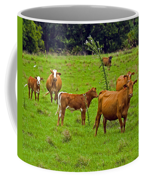 Black; Red; Angus; Brahman; Simmental; Red Poll; Hereford; Cattle; Braford; Cow; Cows; Bull; Milk; B Coffee Mug featuring the photograph Hybrid Cattle On The Deseret Ranch In East Central Florida by Allan Hughes